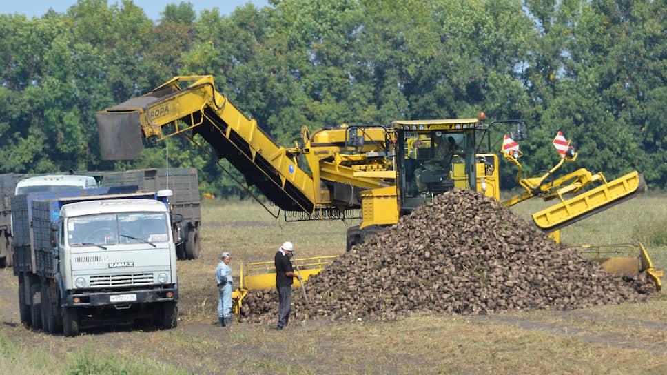 В стране превышен уровень сахара / Чиновники в ответ сокращают посевы свеклы