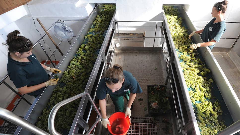 Фермеры-виноделы попросили особых условий / Они просят добавить для них в проект федерального закона отдельную статью