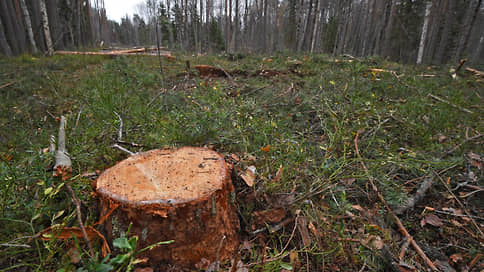Инвестор смотрит в лес  / ПДК «Апшеронск» оспаривает исключение своего проекта из списка приоритетных