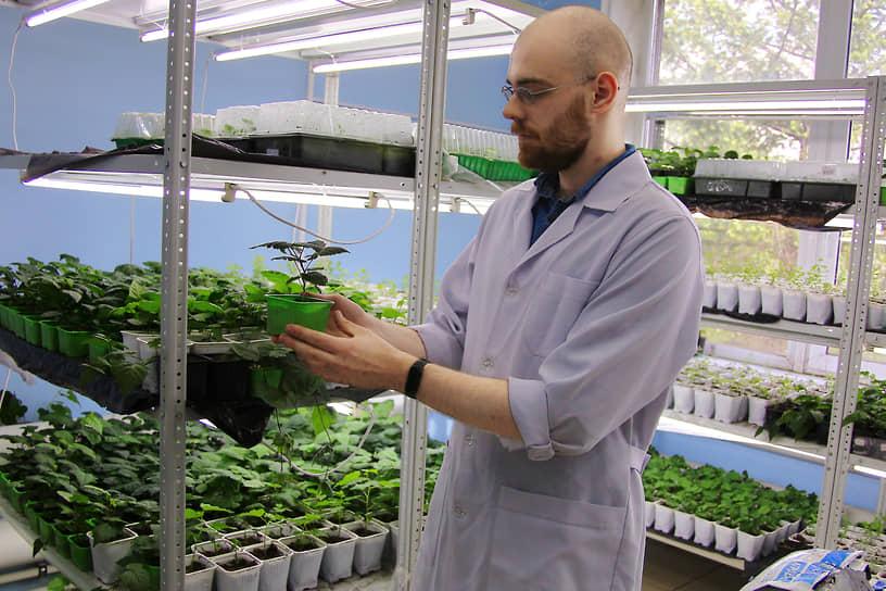 Сотрудник Ботанического сада с рассадой