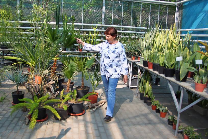 Сотрудник Ботанического сада в теплице