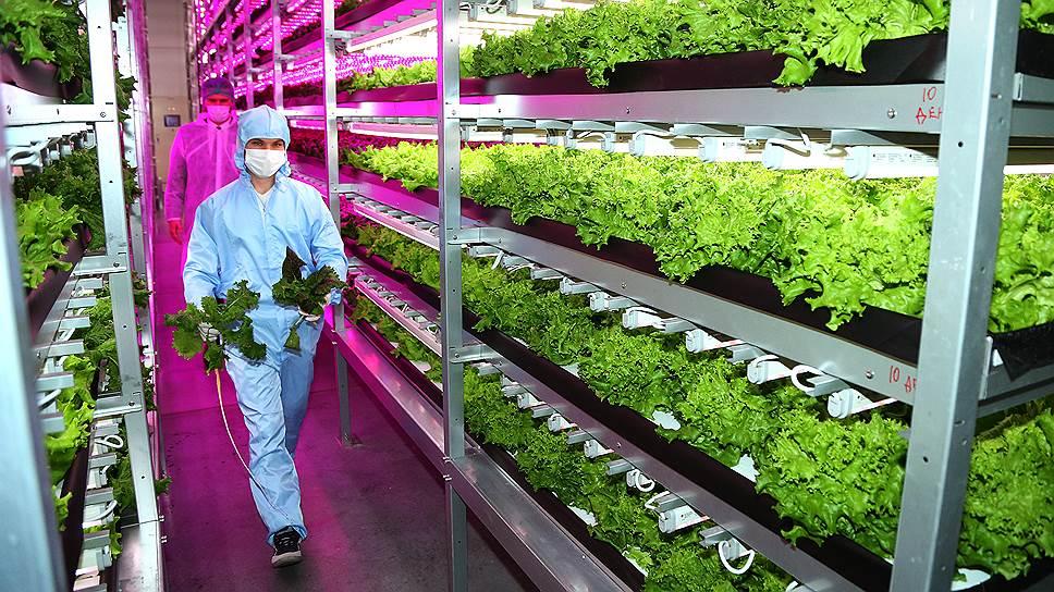 Отечественные агрохолдинги начали увеличивать свои мощности за счет строительства новых предприятий для выращивания овощей и зелени.