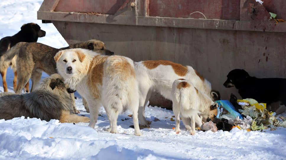 Собакам просят обеспечить гласность / Зоозащитники намерены оспорить принятие закона Ульяновской области по безнадзорным животным