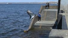 В Самарской области зафиксирована массовая гибель рыбы