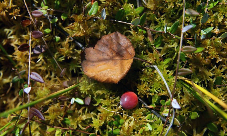 Ягоды и листья падают на землю, составляя причудливые композиции.