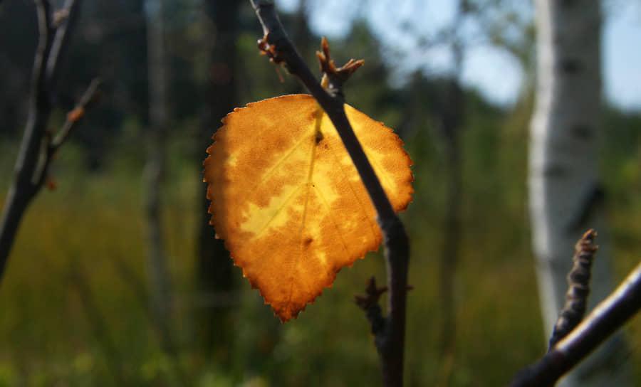 Последние листья на деревьях напоминают о прошедшем лете.