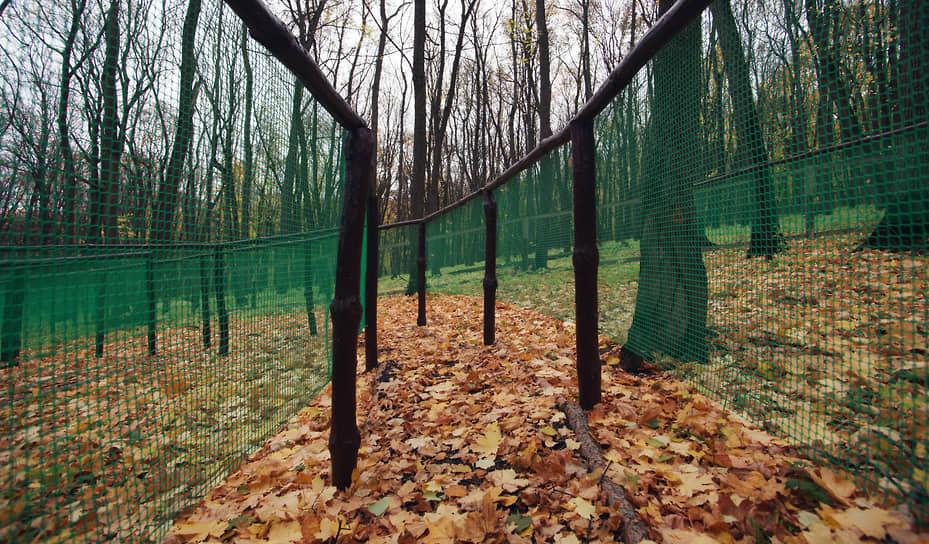 Некоторые деревья полностью скинули свою листву.