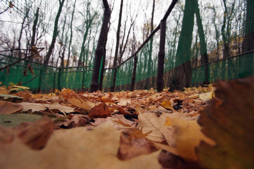 На земле образовался ковер из листьев.