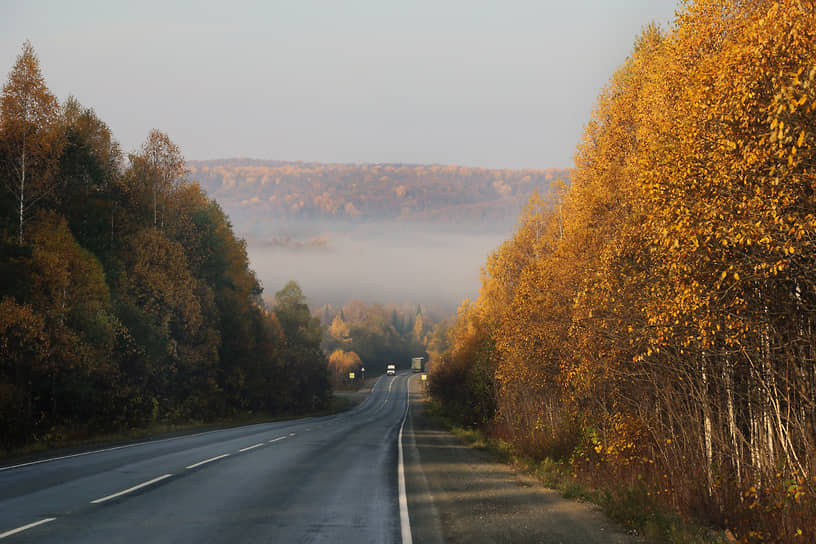 Деревья в золотой листве напоминают великанов, выстроившихся вдоль трассы.