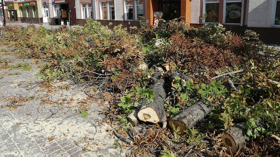 Зачем в Саратове вырубают деревья