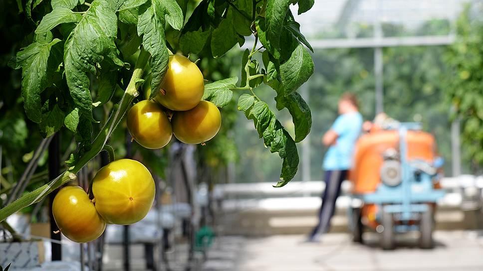 Томат в один ход / Петербургский ТТР-холдинг планирует развернуть в Башкирии производство тепличных овощей
