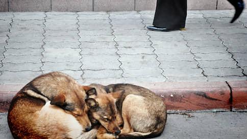 Гуманность не уместилась в бюджет  / Закон об ответственном обращении с животными в Башкирии останется на бумаге