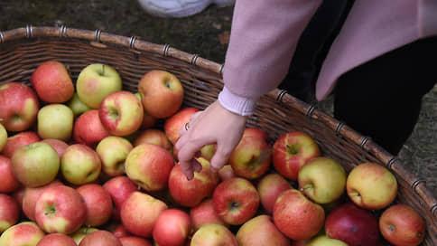 В Чишмах посадят 2 млрд рублей // Плодоовощной питомник закладывает новые сады