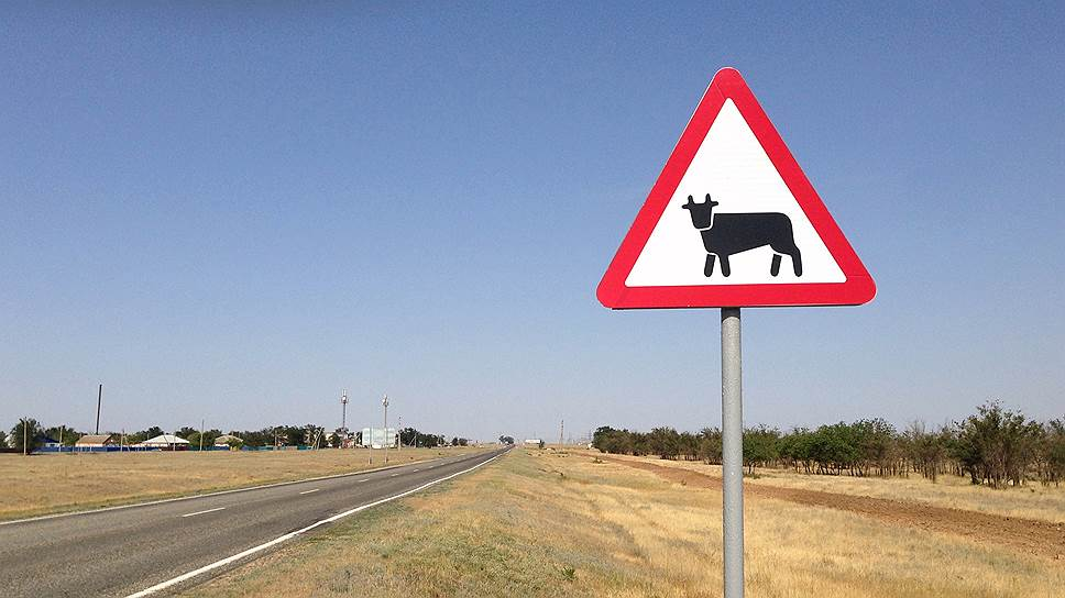 У калмыцких коров появился шанс выйти на правильную дорогу