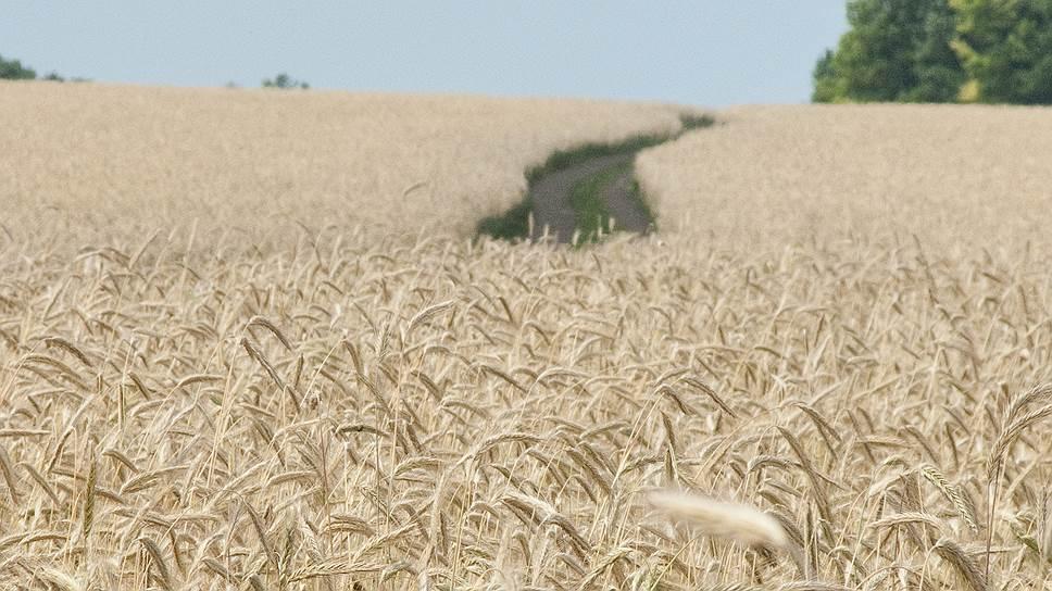 Как аграрии Черноземья справляются с рекордными урожаями зерновых