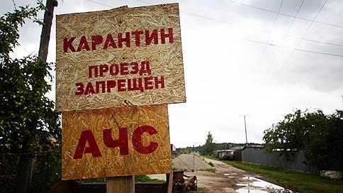 Чума дошла до поросят  / АЧС выявлена уже на второй белгородской площадке «Русагро»