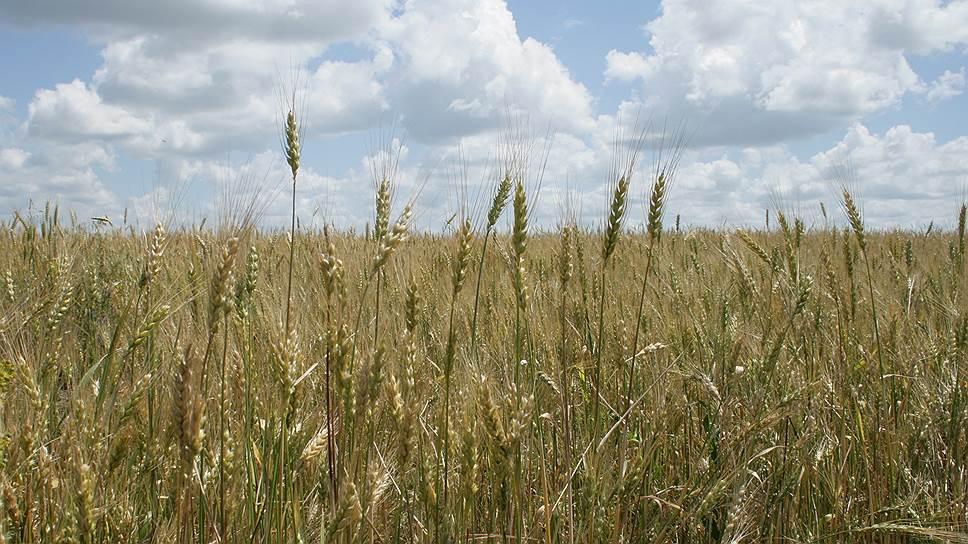 В Липецке зерно прорастет в пластик / Проект по переработке пшеницы в биополимеры может потребовать 63 млрд рублей