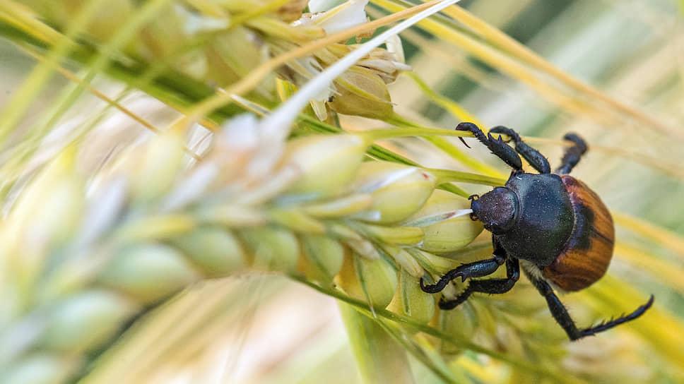 «Иннпромбиотех» крахмалит Курск / В регионе могут наладить переработку пшеницы за 10 млрд рублей