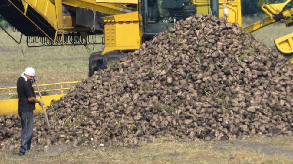 Воронежские аграрии надеются со временем отказаться от импортных семян свеклы