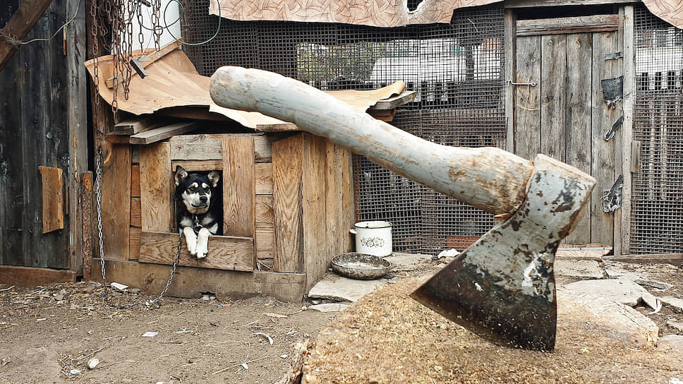 Питомцев подкормят мухами / В Белгородской области организуют производство белка и корма для животных за 2 млрд рублей