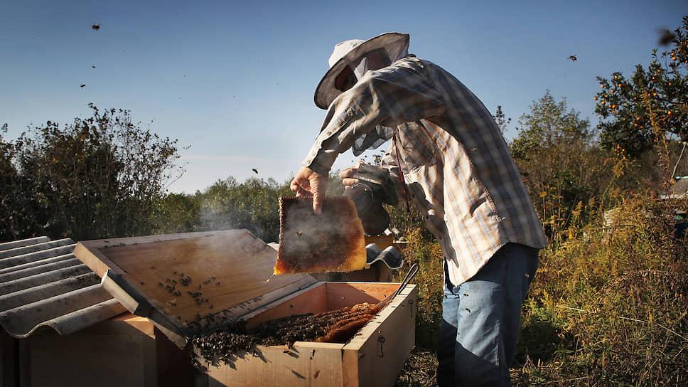 «Условия для полета неблагоприятные» / Курские пчеловоды и чиновники продолжили споры о гибели насекомых в 2020 году