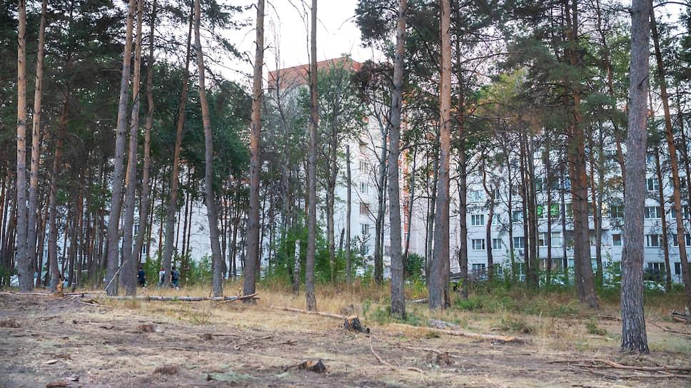 Кто влез по дрова / Владельцы почти 45 га парка на окраине Воронежа готовы к обмену участков