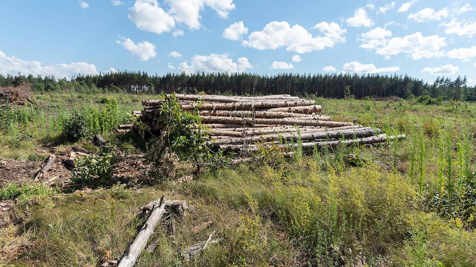 Жилье не срослось с лесом / Департамент архитектуры не увидел условий для высотной застройки в зеленой зоне Воронежа
