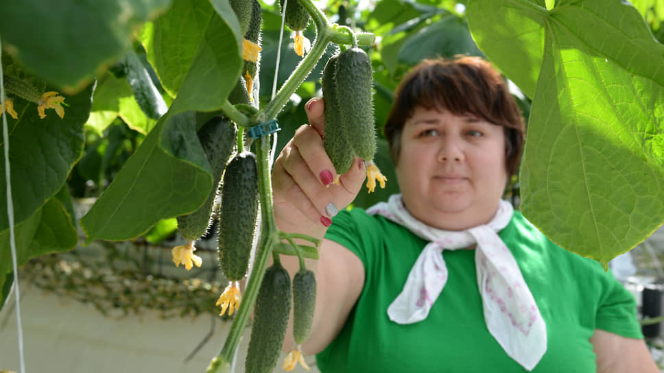 В «Долине овощей» начинается «Рост» / Крупные игроки тепличного рынка Черноземья объединяют активы