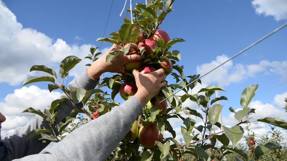 В сады заходят кооперативно / У тамбовских «Садов Мичурина» хотят отсудить имущество незадолго до приватизации