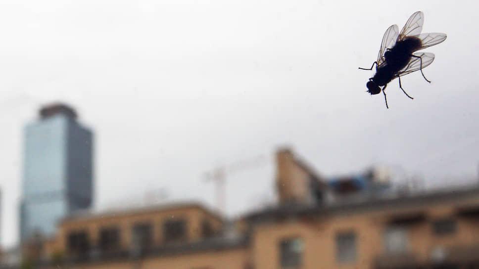 «Черная львинка» добавит альтернативы / На Белгородчине планируют за 833 млн рублей наладить выпуск животного белка из мух