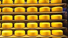 В Белгородской области уничтожено 20 тонн сыра
