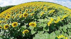 Липецкая область отчиталась о рекордном урожае масличных культур