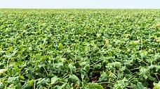 Липецкие аграрии увеличили площади под сахарной свеклой на 18%