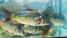 Курские власти подтвердили мор рыбы в реке Снагость