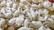 Росприроднадзор оштрафовал тамбовскую птицефабрику ГАП «Ресурс» за 106 нарушений