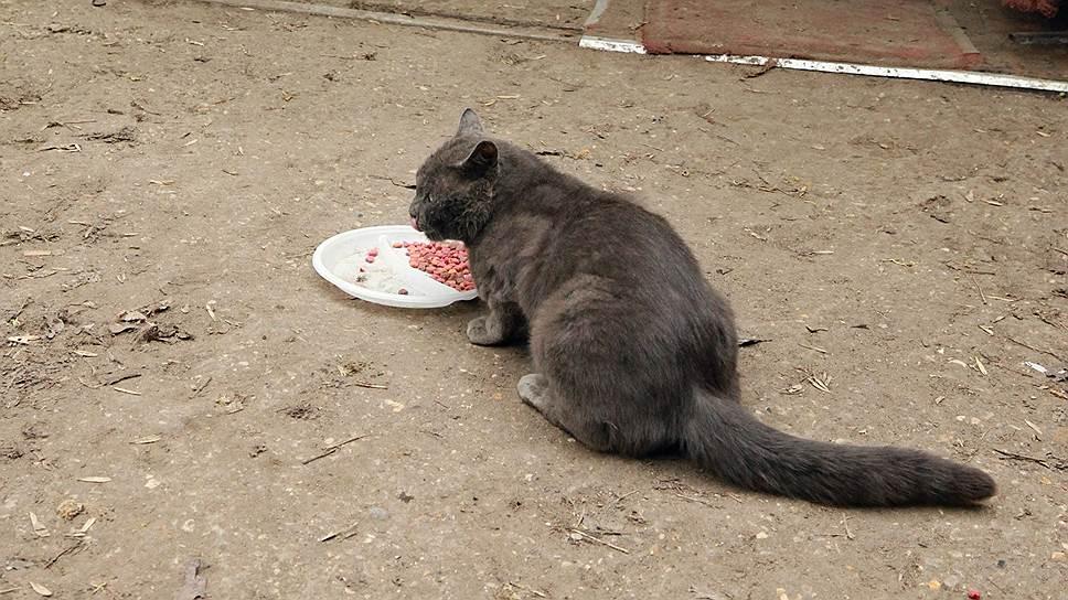 «Мираторг» хочет создать в Курской области производство кормов для домашних животных