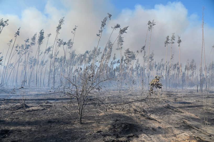 В шесть утра воскресенья ГУ МЧС России по Воронежской области сообщило о возгорании 50 га травы и лесной подстилки в Рамонском районе, возле села Медовка