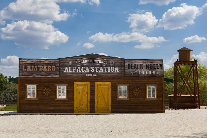 Планируется, что в воронежском El paco будет обитать 8-10 альпак.