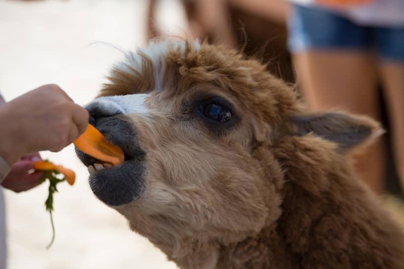 Животных можно не только покормить, но и погладить.