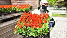 В Ярославле посадят 800 тысяч цветов