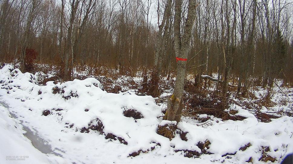 На территории памятника природы под Ярославлем незаконно построили дорогу / Правоохранительным органам предстоит установить виновных лиц