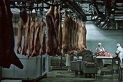 БЕЛГОРОДСКИЕ ЕВРОМЕЧТЫ В «Мираторге» рассчитывают, что скоро свиньи с «Корочи» поедут в страны ЕС