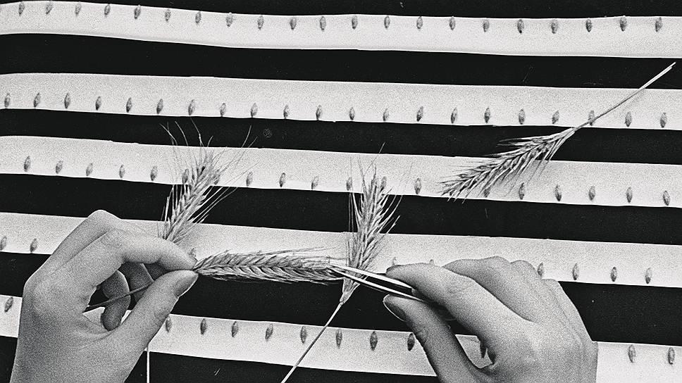 Закрома Родины. В средней полосе России непредсказуемый климат, это осложняет работу зерновых трейдеров в регионе