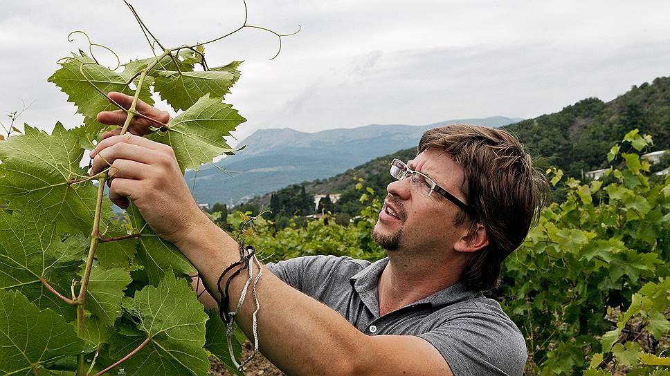 По стопам Prosecco. Павел Пестов мечтает построить в Крыму новый виноградарско-винодельческий холдинг не хуже итальянских