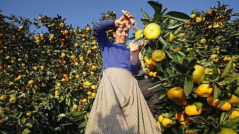 Запретное яблоко  / Кто выиграет от запрета на импорт продуктов питания