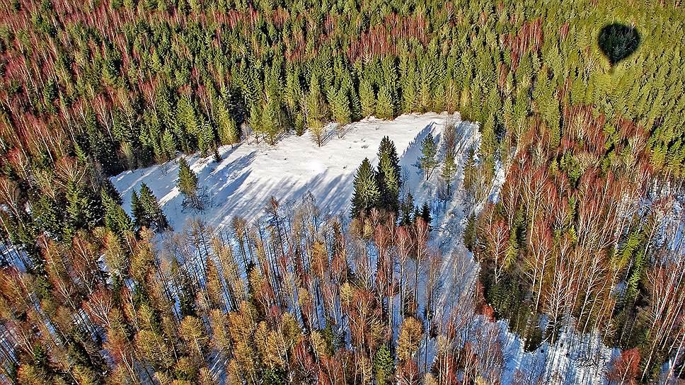 В этом году на рост дефицита лесосырья на внутреннем рынке повлияло увеличение доли экспорта