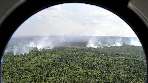 Правительство присмотрит за лесом  / Оно усилит контроль за лесным комплексом