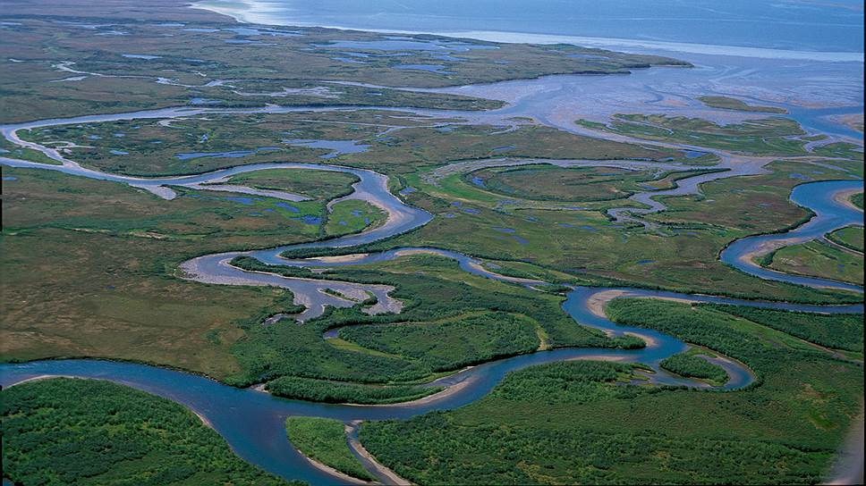 Гектар зеленого моря