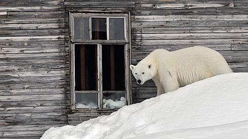 Медведи нам не соседи