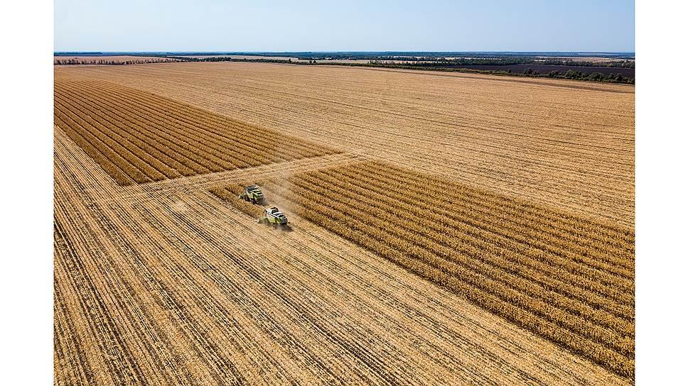Уборка урожая семенной кукурузы